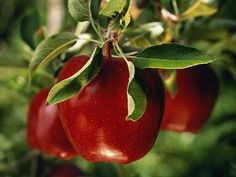 Dr. Oz; 99 healthiest foods.- some really interesting info about best food picks and what to look for seasonally