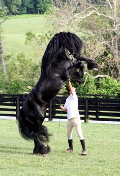 Majestic black Andalusian The Andalusian, also known as the Pure Spanish Horse or PRE (Pura Raza Española), is a horse breed from the Iberian Peninsula.Strongly built, and compact yet elegant, Andalusians have long, thick manes and tails. Their most common coat color is gray, although they can be found in many other colors. They are known for their intelligence, sensitivity and docility.