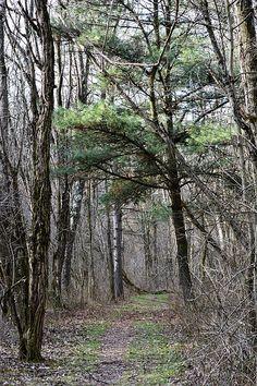 Hilltop Trail in Portersville,  Pennsylvania
