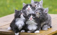 Synchronized staring #kittens #cats Kittens by Aamad Zanzitta on 500px