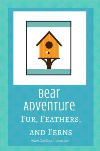 Bear Fur Feathers and Ferns