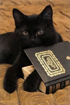 A cat and a book ♥