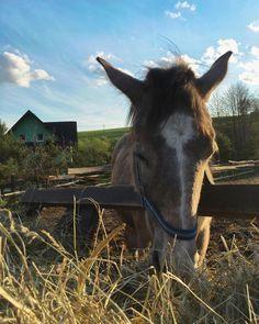 A horse.  ___ #slovakia #kon #sky #europe #holiday #withgf #cute #animal #domestic #spring #svatyanton #stiavnickevrchy #slovensko #horse #mammal #jar #ranc #ranch