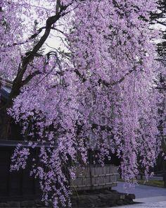 Violet Aesthetic, Dark Purple Aesthetic, Lavender Aesthetic, Nature Aesthetic, Aesthetic Colors, Flower Aesthetic, Aesthetic Collage, Aesthetic Photo, Aesthetic Pictures