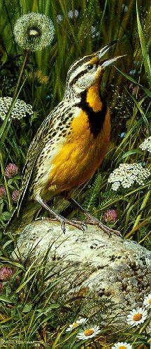Carl Brenders > Meadowlark