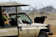 Botwana Safari