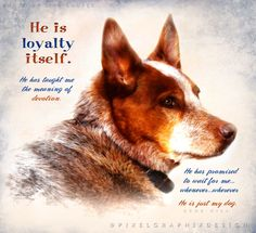 """""""He is loyalty itself. He has taught me the meaning of devotion. He has promised to wait for me... whenever... wherever - in case I need him. And I expect I will - as I always have. He is just my dog.""""  - Gene Hill  Photo by Lisa Couper, enhanced by PixelGraphix- facebook.com/PixelGraphixDesign"""