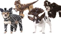 Still looking for pet costume ideas? Click for a treasury of utterly necessary dog costumes!