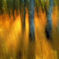 Image result for intentional camera movement photography