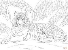Coloring Pages For Adults Tiger Ile Ilgili Gorsel Sonucu