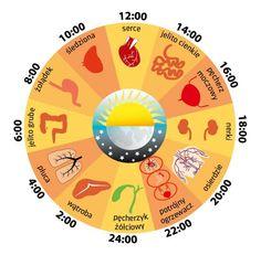 Medycyna konwencjonalna potwierdza kolejną mądrość Wschodu: aktywność poszczególnych organów i układów, produkcja hormonów i przyswajalność ... Holistic Care, Alternative Medicine, Health And Wellness, Stress, Clock, Feng Shui, Biscotti, Ash, Mandala