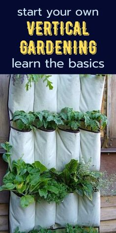 Vertical garden is an innovative, effortless, and highly productive garden, that utilizes various resources to allow a plant to grow vertically rather than along the surface of the horizon. Here is how you can start your own vertical garden.   #verticalgardening #verticalgardens #gardeningideas #creativegardeningideas Urban People, Growing Veggies, Amazing Gardens, Surface, It Is Finished, Advice, Herbs, Canning, Plants