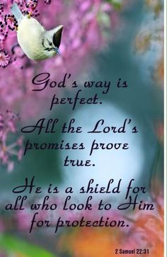 This 1 scripture assures us of 3 things: God is a perfectionist and desires His perfect will for you; God is truthful and God is protective of all who seek Him. 2 Sam H. Scripture Verses, Bible Verses Quotes, Bible Scriptures, Biblical Quotes, Religious Quotes, Spiritual Quotes, Spiritual Thoughts, 2 Samuel, Samuel Bible