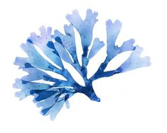 Navy Blue Set of Four Inch Seaweed Prints No.s and 25 in classic navy blue, Coastal Decor Print Set Watercolor Animals, Abstract Watercolor, Watercolor Flowers, Watercolor Paintings, Watercolours, Sea Plants, Coral Art, Blue Painting, Ocean Themes