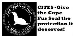 Give the Cape Fur Seal the protection it deserves. https://secure.avaaz.org/en/petition/Give_the_Cape_Fur_Seal_the_protection_it_deserves/?wgWwncb @sea Shepherd Conservation Society #defendconserveprotect