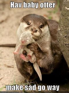 Officially obsessed with otters. Thanks @Keri Norton