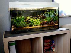 Kallax Expedit Regal Als Aquarium Unterschrank Aquarium Fische