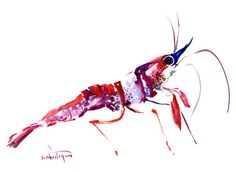 Red Bunded PistolShrimporiginal watercolor, 9 X 12 in, brush painting, sea world…