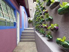 Awesome Vertical Garden With Recycled PET Bottles At Poor Family Home In Sao Paulo