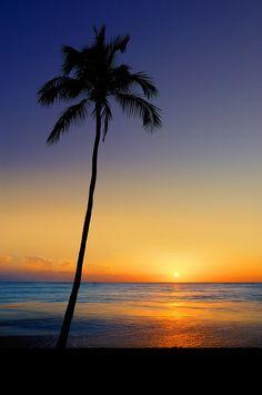 ~~Leaning Sun Palm ~ sunset, Waikiki Beach, Oahu, Hawaii by Surrealize~~ Beautiful Sunrise, Beautiful Beaches, To Infinity And Beyond, Palm Trees, Surfing, Beautiful Pictures, Scenery, Wanderlust, Around The Worlds
