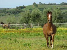 #maremma #horse #nature #colors #animals