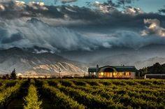 Places I want to go: New Zealand Vineyard