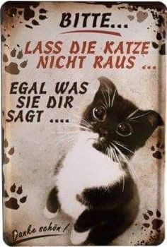 https://www.facebook.com/KatzenKatzennochmehrKatzen/photos/a.569447219837630.1073741829.517088758406810/786033134845703/?type=1