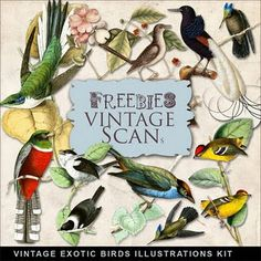 vintage exotic birds illustrations