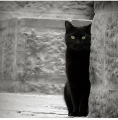I watch you human.