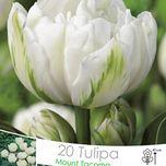 die besten 25 tulpen pflege ideen auf pinterest tulpen pflanzen tulpen schneiden und. Black Bedroom Furniture Sets. Home Design Ideas