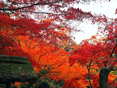 Fall Foliage in Kyoto - the fernweh wolf