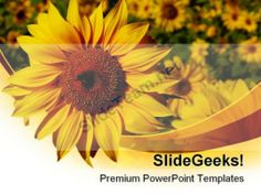 Sunflower01 Nature PowerPoint Templates And PowerPoint Backgrounds 0211 #PowerPoint #Templates #Themes #Background