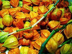 Parece uma flor, mas é uma frutinha linda: o physalis tem um sabor doce, levemente ácido, você já provou?       É uma...