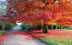 Beautiful Autumn Tree hd wallpapers