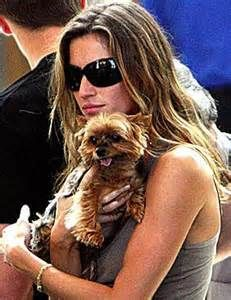 Image detail for -Miniature Yorkshire Terrier: Celebrities and their precious Yorkies