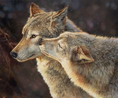 "Give me a ""Wolf Kiss!"" a fine art edition by artist and wolf enthusiast Bonnie Marris from The Greenwich Workshop. Smooch one! Wildlife Paintings, Wildlife Art, Wolf Spirit, Spirit Animal, Beautiful Creatures, Animals Beautiful, Le Husky, Wolf Call, Animals And Pets"