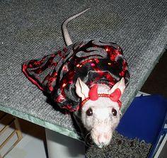rat, Halloween costume