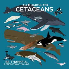 I Am Thankful For Cetaceans design from Be Thankful & Protect What You Love series by Peppermint Narwhal. Buy this artwork on apparel kids clothes stickers and more. Fun Facts About Animals, Animal Facts, Underwater Creatures, Ocean Creatures, Nature Sauvage, Save Our Oceans, Whale Art, Prehistoric Creatures, Animal Species