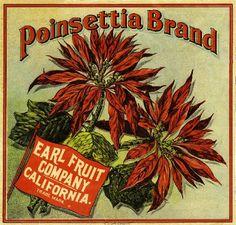 Los Angeles Poinsettia Christmas Orange Citrus Fruit Crate Box Label Art Print. $9.99, via Etsy.