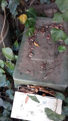Bee removal in Johannesburg bees in a box in the garden