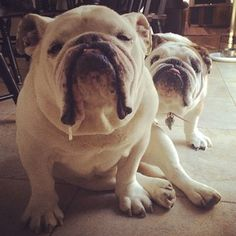 """""""There's no such thing as being TOO foxy."""" 