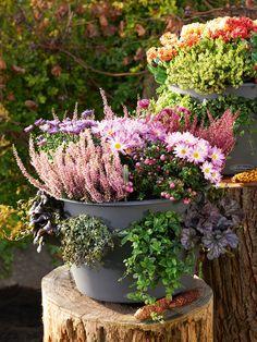 Cascada Stackable Self-Watering Herb Planter, Single