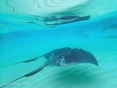 REFLECTIONS. Beautiful moment at Stingray City in Grand Cayman | by Acquarius Sea Tours