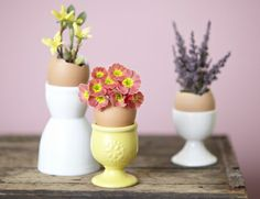 egg cups with egg shells as bud vases Iris Flowers, Small Flowers, Flower Pots, Pretty Flowers, Egg Shell Planters, Cute Crafts, Diy Crafts, Home Made Simple, Great Teacher Gifts