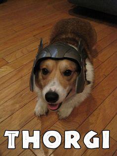 Thor + Corgi = Thorgi! #halloween