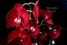 Картинки по запросу орхидея фаленопсис из фоамирана купить