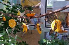 Funky+Orange+Butterfly+Feeder decor diy butterfly feeder How to Attract Butterflies: Butterfly Garden Design Ideas