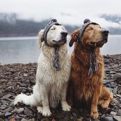Golden Retriever Puppies Those are some happy doggo's! Cute Funny Animals, Cute Baby Animals, Funny Dogs, Animals And Pets, Funny Memes, Cute Puppies, Cute Dogs, Dogs And Puppies, Doggies