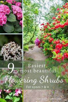 These are my favorite, easiest, and most beautiful flowering shrubs for zones 7 and I Flowering Shrubs For Shade, Shade Shrubs, Bushes And Shrubs, Shade Plants, Flowering Trees, Shrubs For Landscaping, Garden Shrubs, Landscaping Ideas, Flowers Perennials