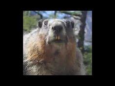 Souhait Humoristique -  Retraite - Marmotte Chiante - Ep.01 Voici ma première vidéo pour des souhaits a envoyer a un colleque qui part a la retraite !  #maitrefun #marmotte #chiante #marmottechiante #vulgaire #humour #drole #comique